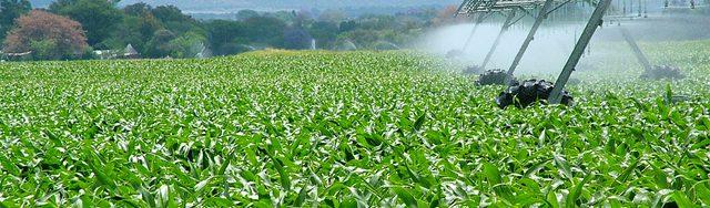 Epandage de pesticides sur du maïs